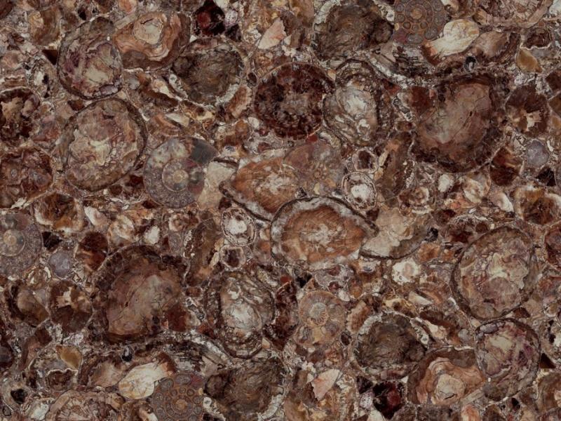 Semi-précieux Brown Petrified wood