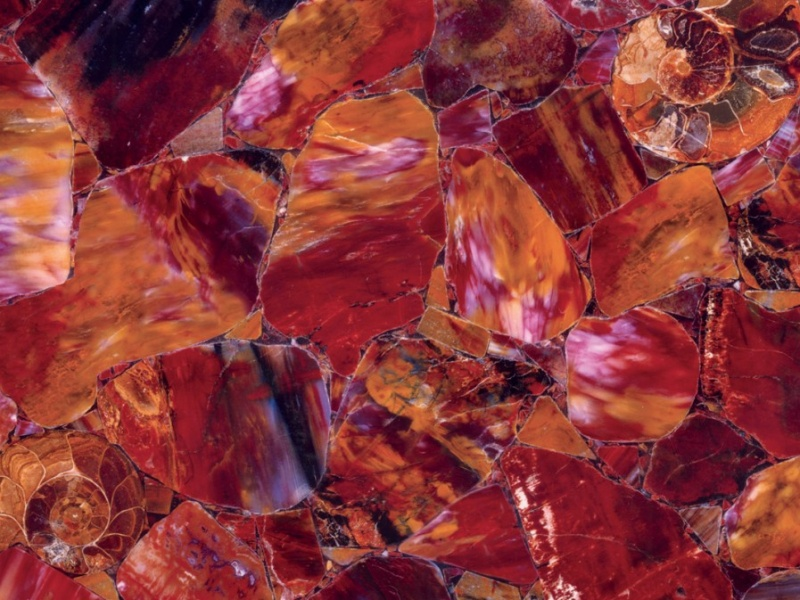 Semi-précieux Multicolor Petrified Wood