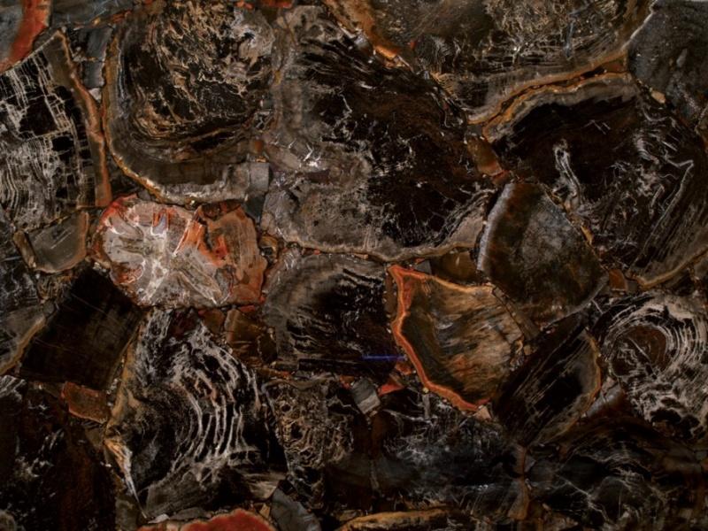 Semi-précieux Black Petrified Wood