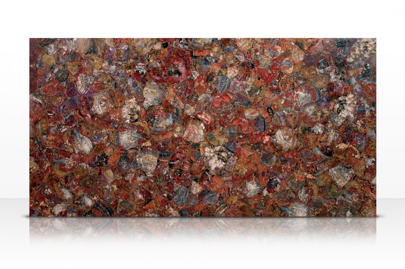 Semi-précieux Multicolor Petrified Wood slab