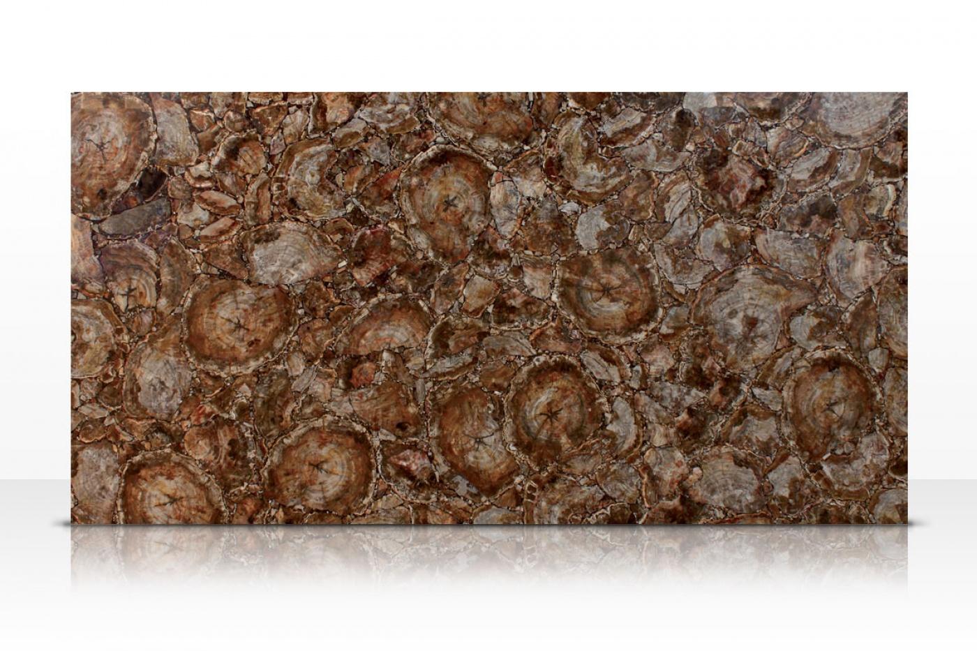 Marbre Brown Petrified Wood slab
