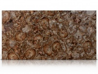 Brown Petrified Wood slab